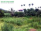 Cần bán 2 lô đất đường Trịnh Quang Nghị, xã Phong Phú, huyện Bình Chánh